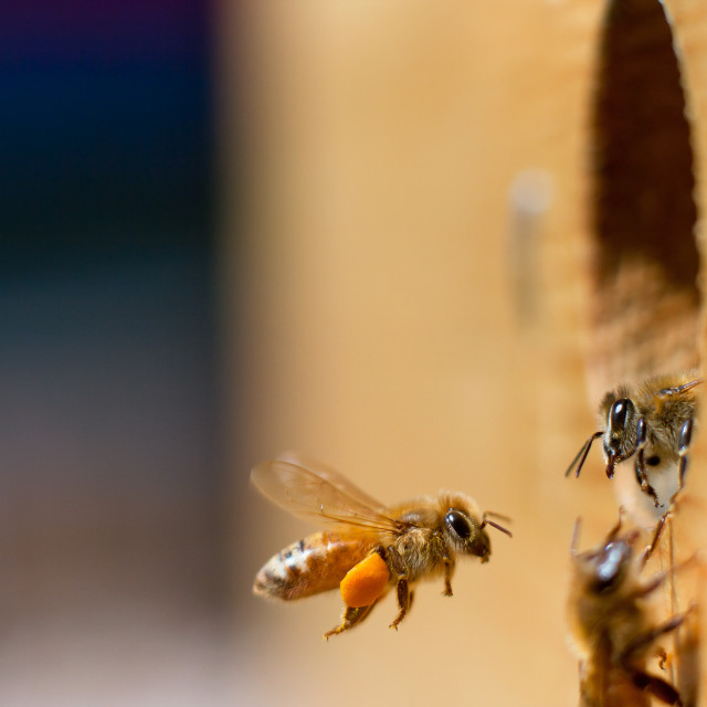 """Honeybee greeting"" stock image"