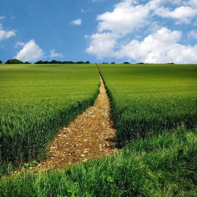 """Berkshire Summer Landscape"" stock image"