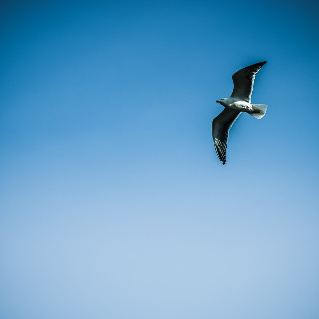 """gull"" stock image"