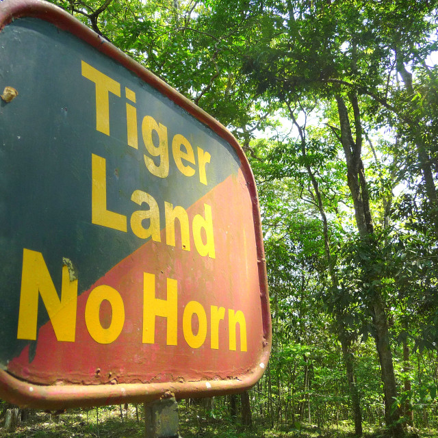 """Tigerland"" stock image"