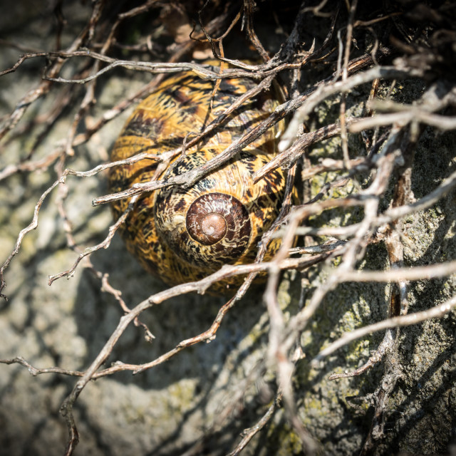 """""""Snail betwen dried branches"""" stock image"""
