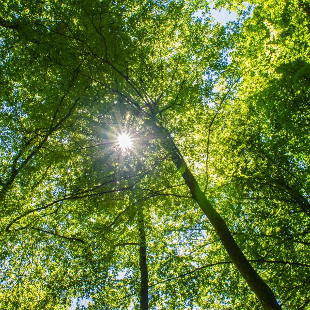 """""""Summer Sun"""" stock image"""