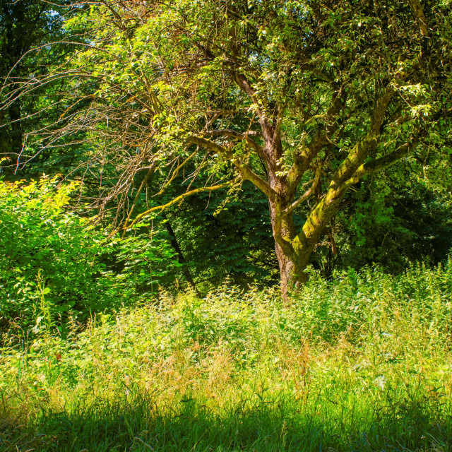 """""""Lushness Of Summer Forest"""" stock image"""
