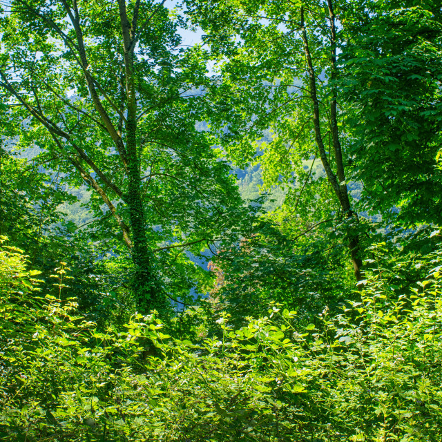 """""""Colours Of The Forest"""" stock image"""