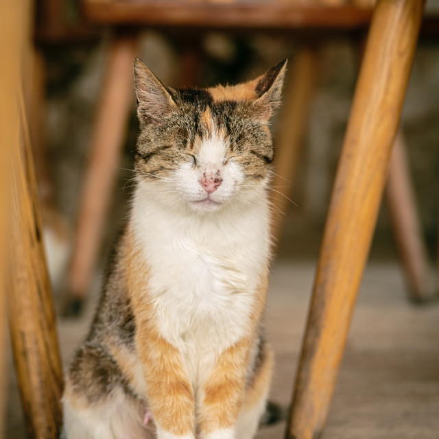 """Calico among the chairs"" stock image"