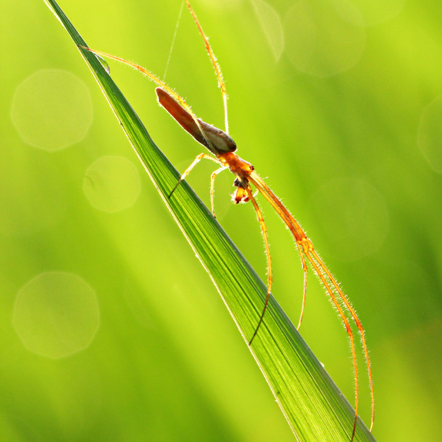 """Little Brown Spidey"" stock image"