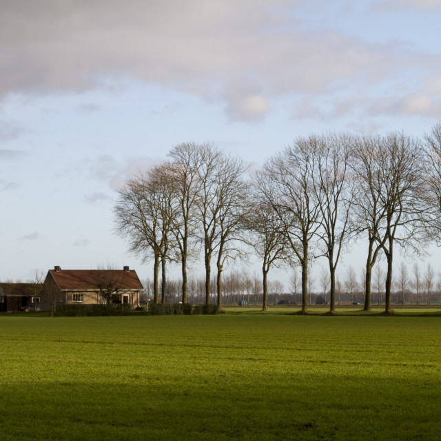 """Dutch winter landscape"" stock image"