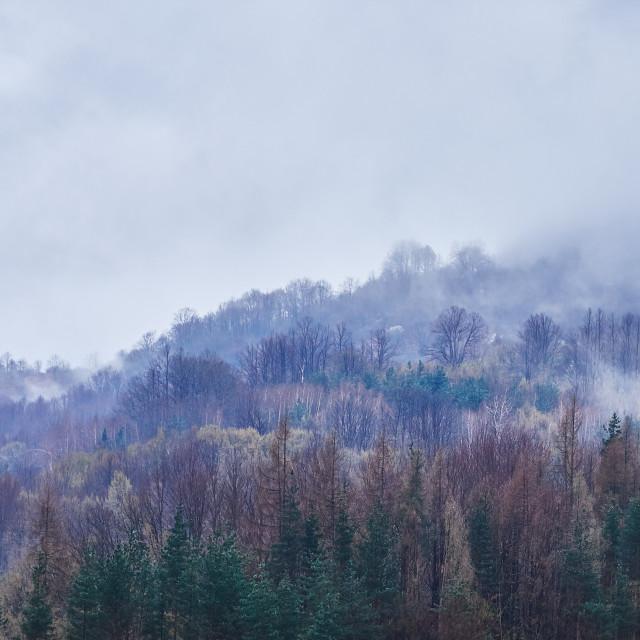 """Shrouded in mist"" stock image"