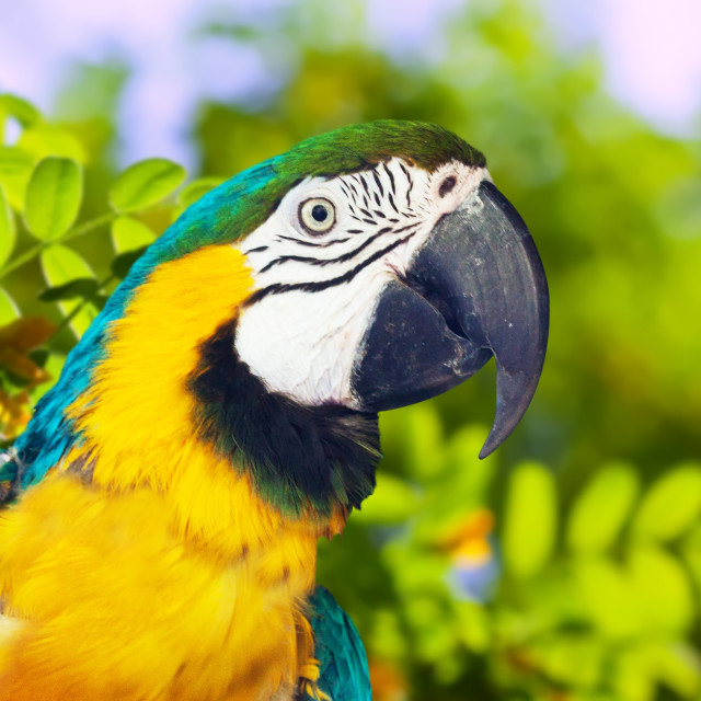 """""""macaw in wildness area"""" stock image"""