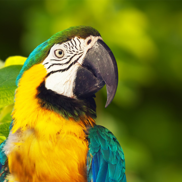 """""""Closeup of Green-winged macaw"""" stock image"""