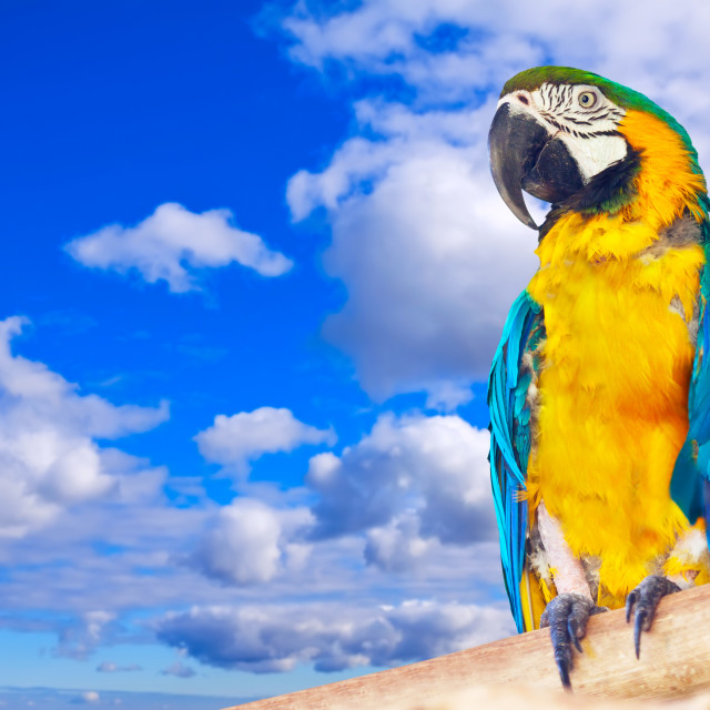"""""""Macaw against sky"""" stock image"""
