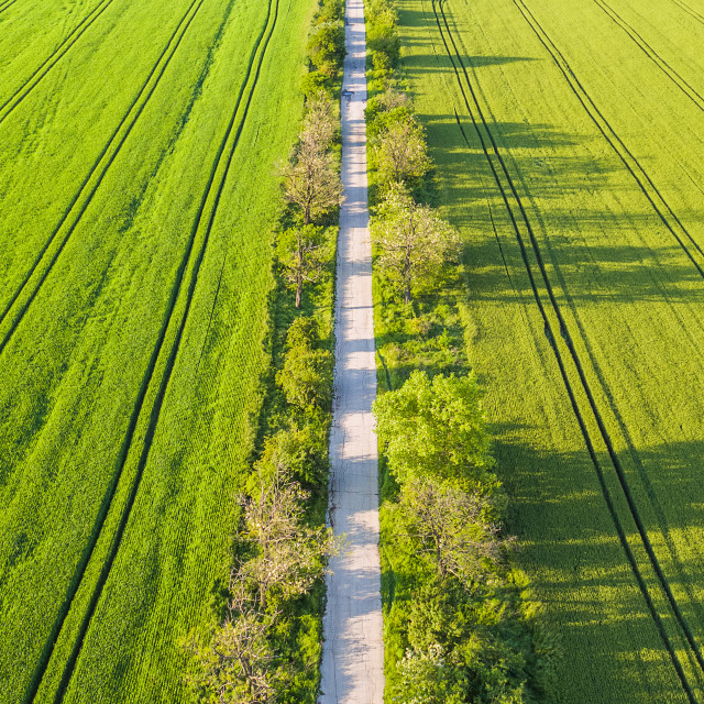 """""""Aeriala view of green wheat field and sunny day"""" stock image"""