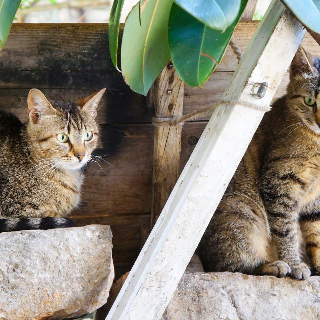 """Two adorable kitties sitting on rocks outdoors"" stock image"