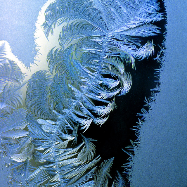 """""""Frost on a windowpane"""" stock image"""