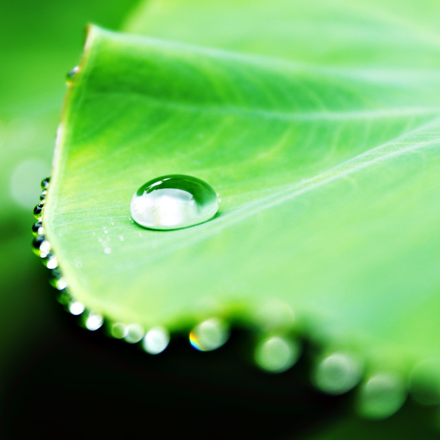 """Raindrop on A leaf"" stock image"