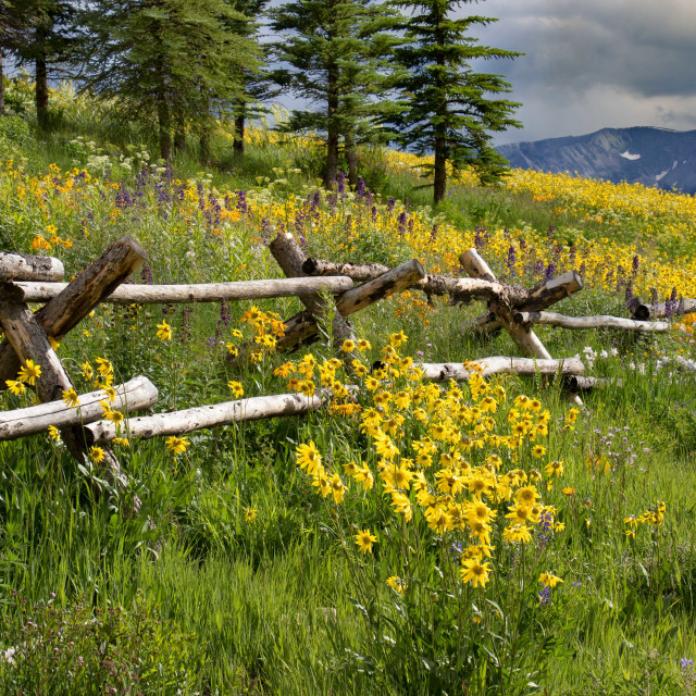"""Wildflower Fence"" stock image"