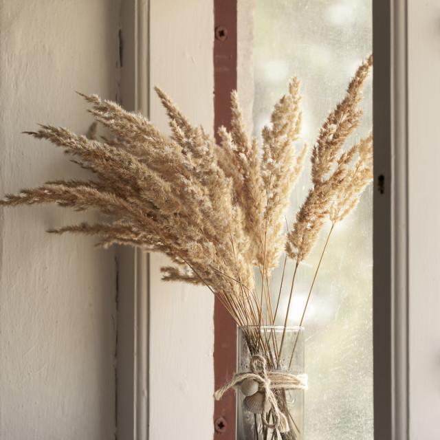 """Vase in window"" stock image"