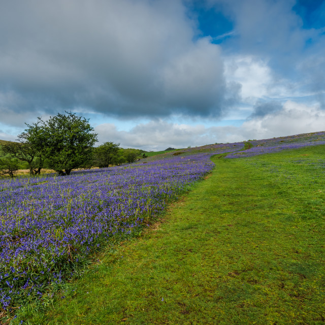 """""""Wild meadow and hills with bluebells"""" stock image"""
