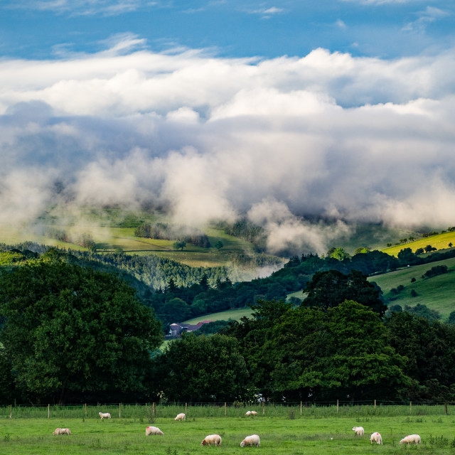 """""""Mist Rises to Meet Clouds"""" stock image"""