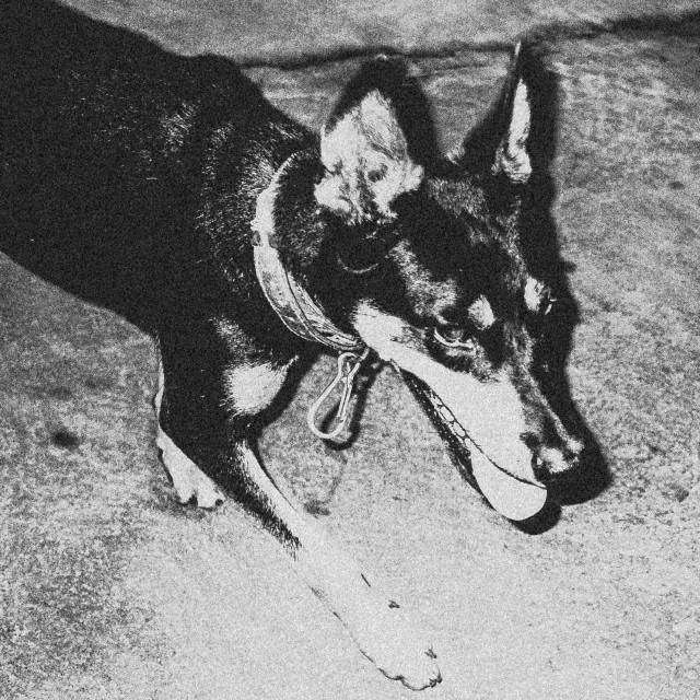 """Lost dog !"" stock image"
