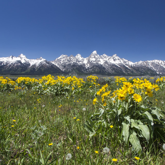 """Summer in the Tetons"" stock image"