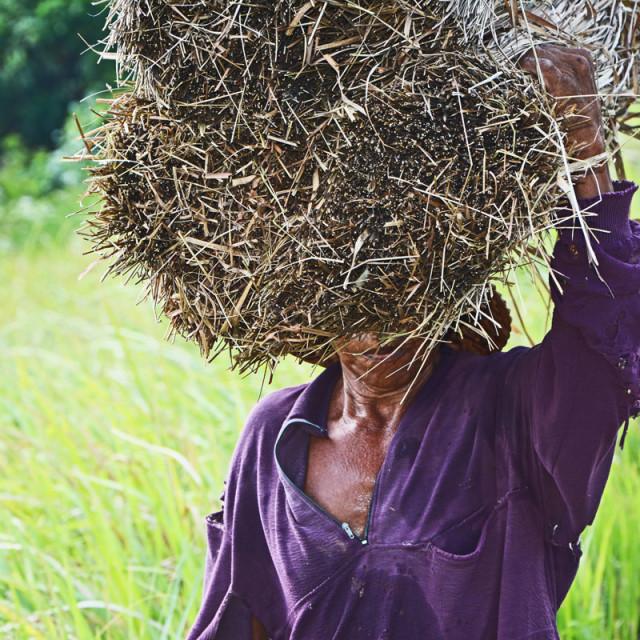 """""""fields worker"""" stock image"""