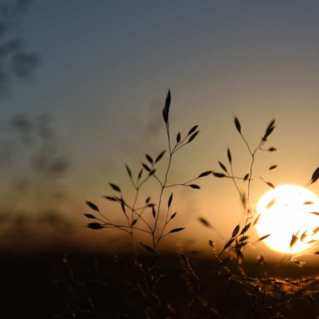 """Meadow grass sunset."" stock image"