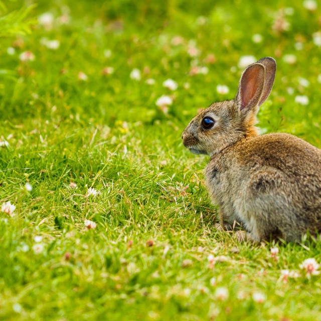 """""""Young bunny"""" stock image"""