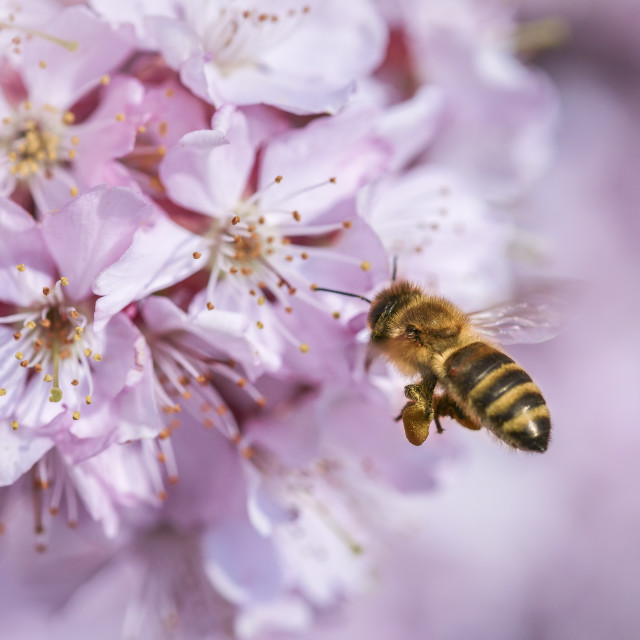 """working bee"" stock image"