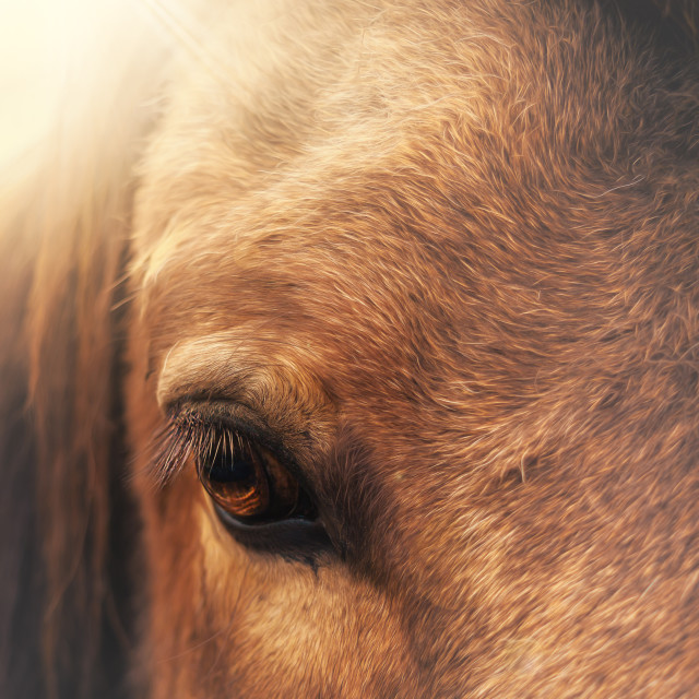 """equine eye"" stock image"