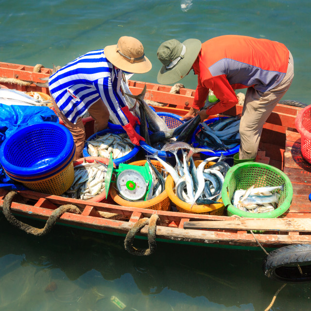 """""""seafood trading scene in a bustling fishing port in Phu Quoc Island"""" stock image"""