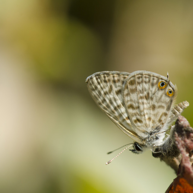 """Tiny Butterfly, resting."" stock image"
