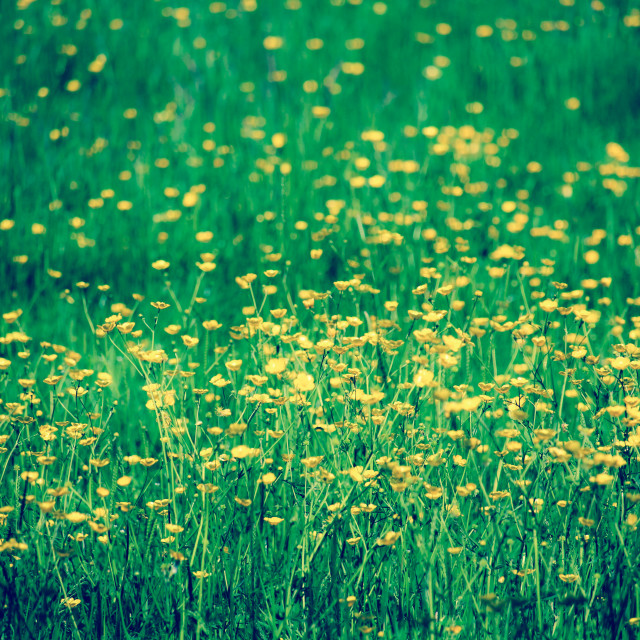 """Summer Meadow"" stock image"