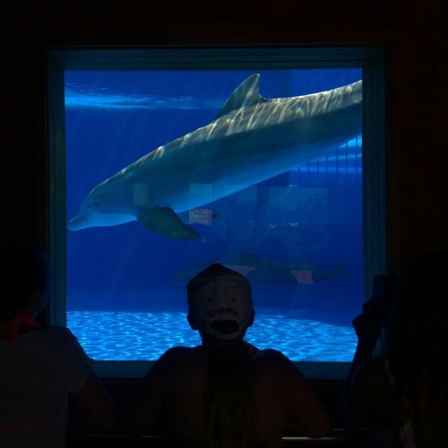 """""""Dolphin Aquarium"""" stock image"""
