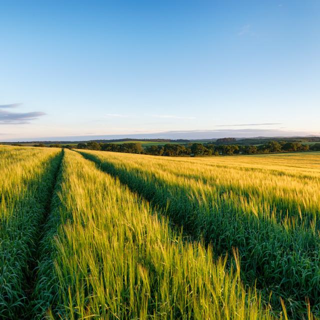 """Farmland in Cornwall"" stock image"