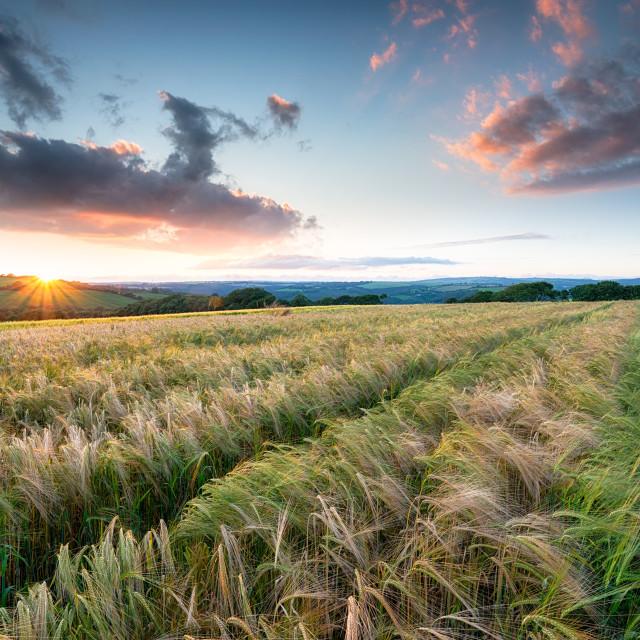 """Beautiful Sunset over Farmland"" stock image"