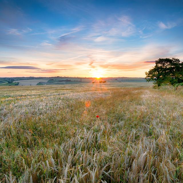 """Somsert Countryside"" stock image"