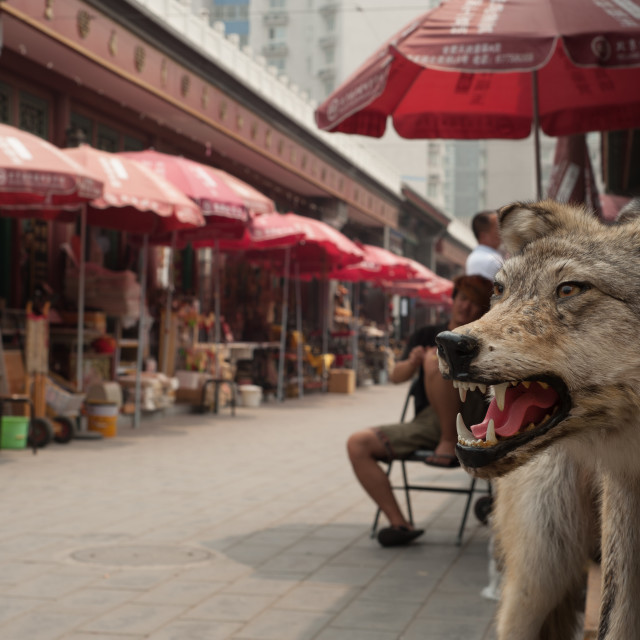 """Stuffed Wolf at antiques market, Beijing, China"" stock image"