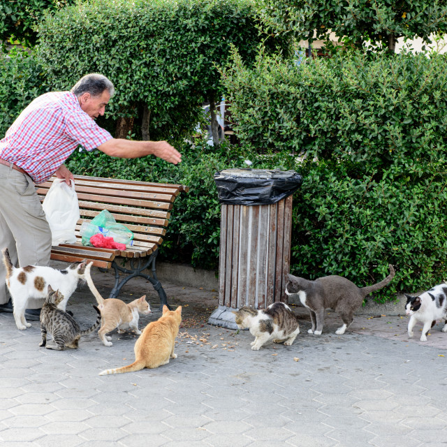"""Man feeding stray cats in Kos Town, Greece"" stock image"