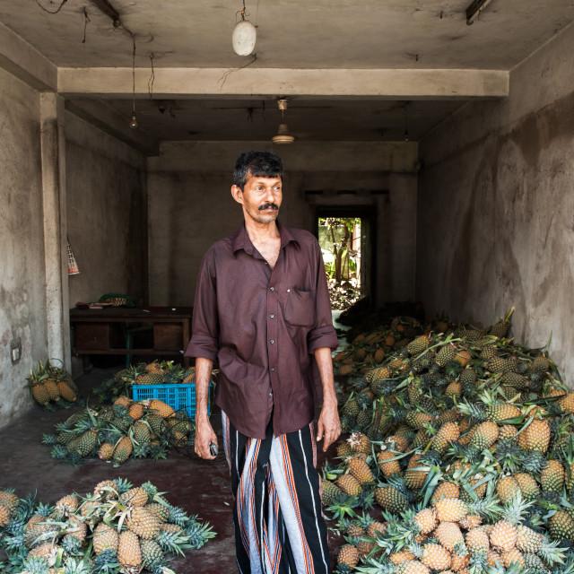 """Man selling pineapples, Sri Lanka"" stock image"