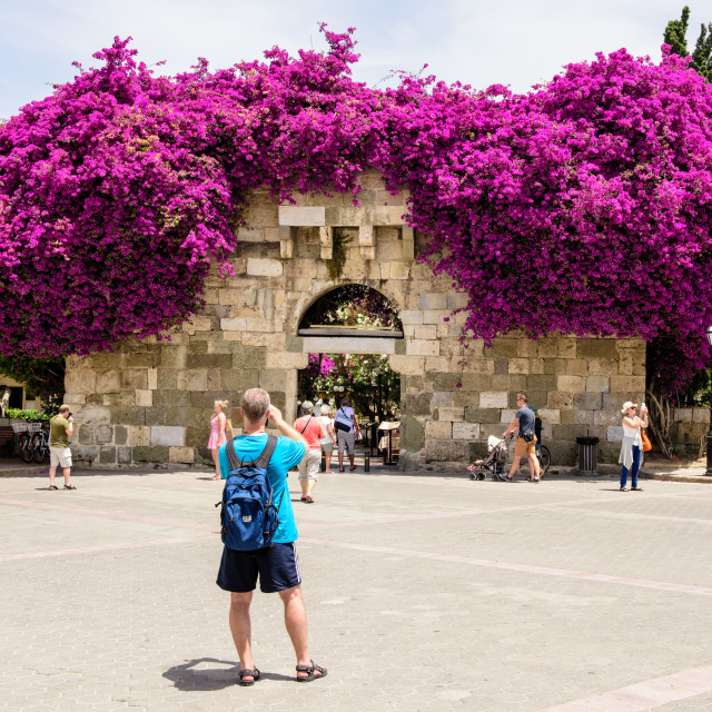 """Mass of purple flowers above archway, Eleftherias Square, Kos, Greece"" stock image"