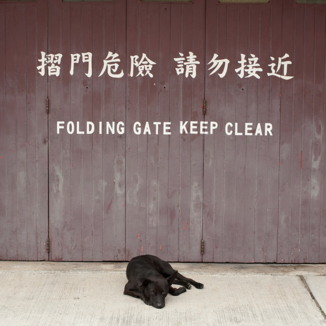 """A black dog rests outside a wooden gate, China"" stock image"