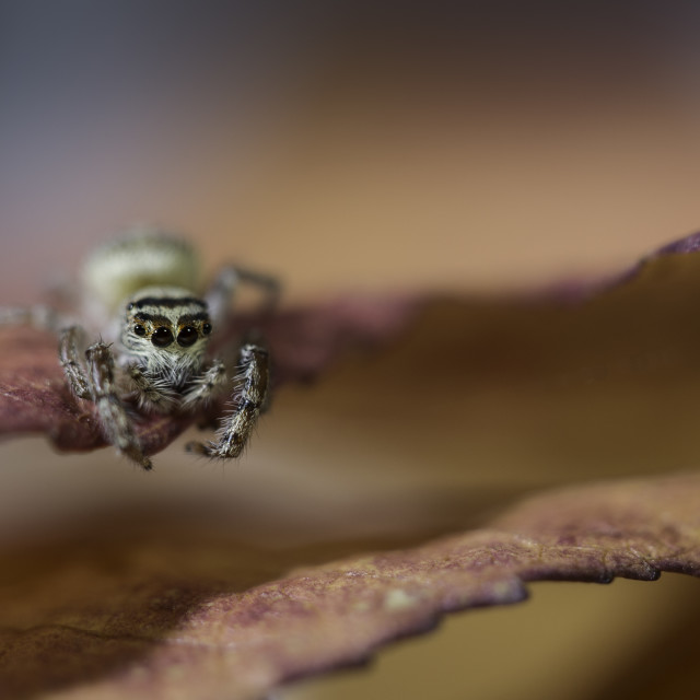 """Autumn Spider"" stock image"