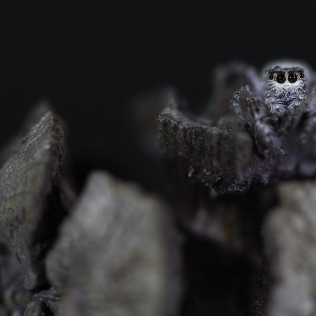 """Lurking Spider"" stock image"