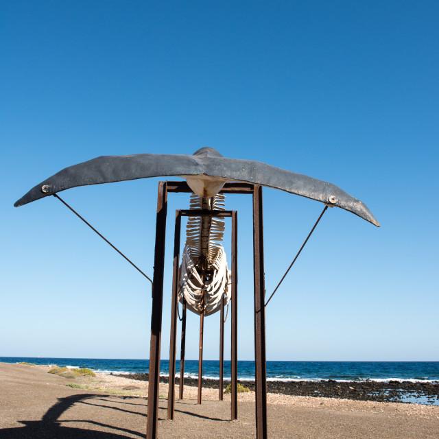 """Rear View of Whale Skeleton - Salinas Del Carmen, Fuerteventura - Spain"" stock image"