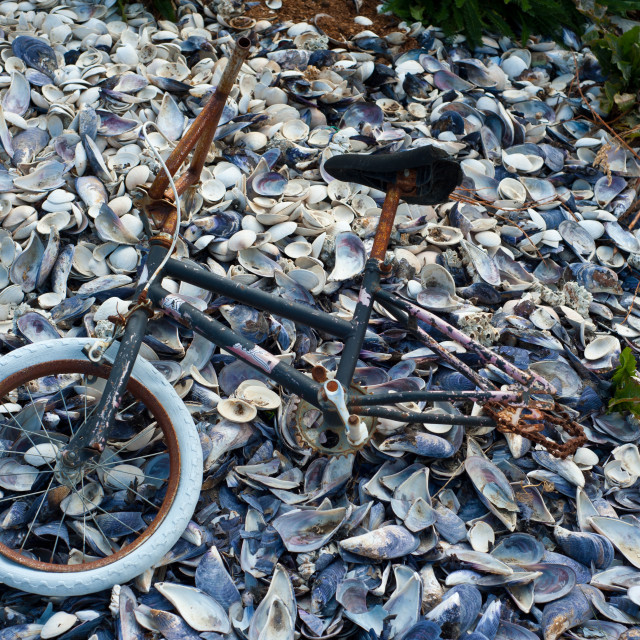 """Rusty bike lying on old mussel shells"" stock image"