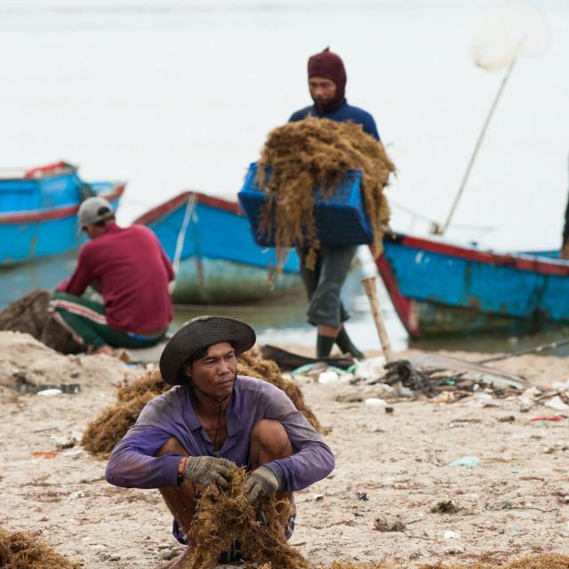 """Seaweed farmers, Nah Trang, Vietnam"" stock image"