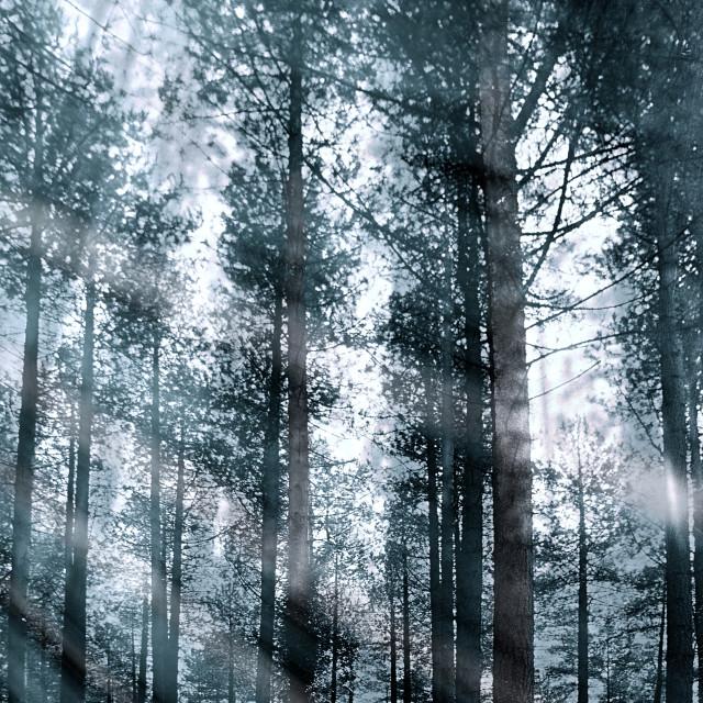 """""""I Talk to the Trees..."""" stock image"""