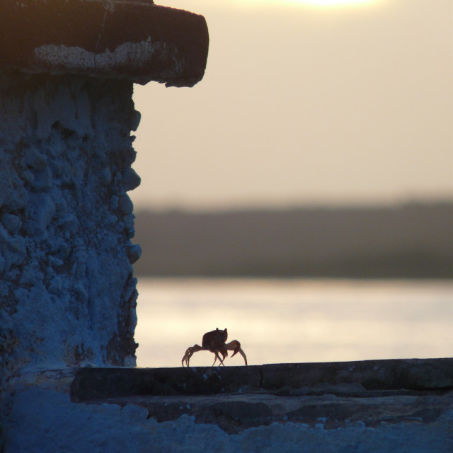 """Crab at Sunset"" stock image"