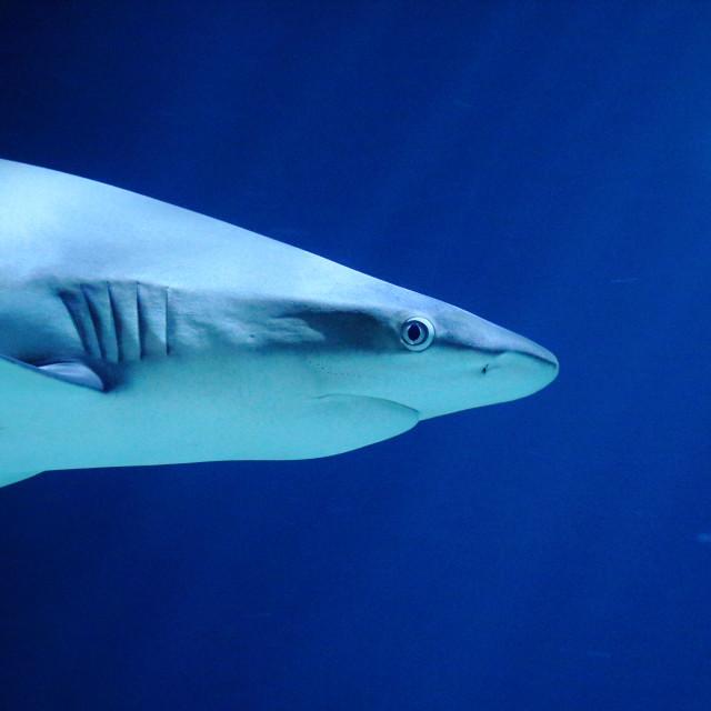 """shark"" stock image"